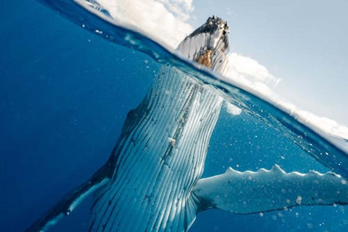 Balinalar İnsanları Neden Yutamaz?