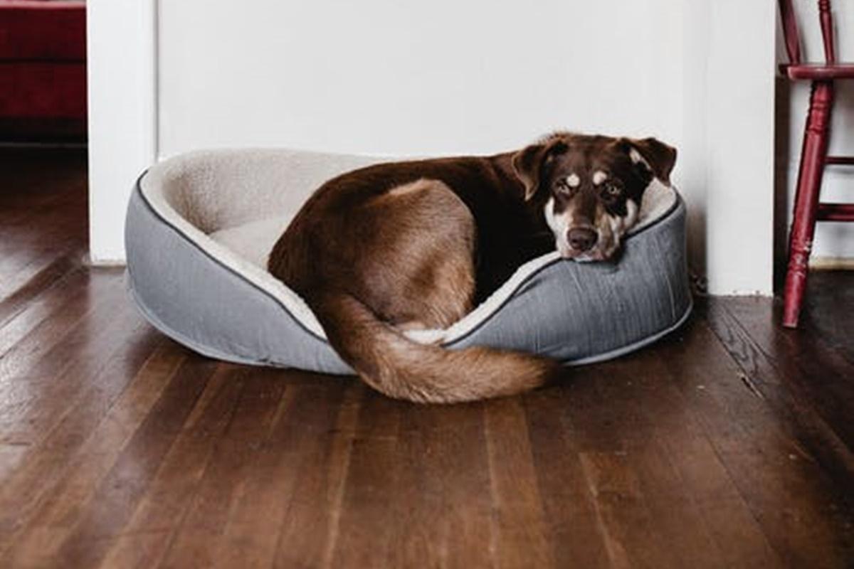 Evde Bakımı Kolay Köpekler Hangileridir?