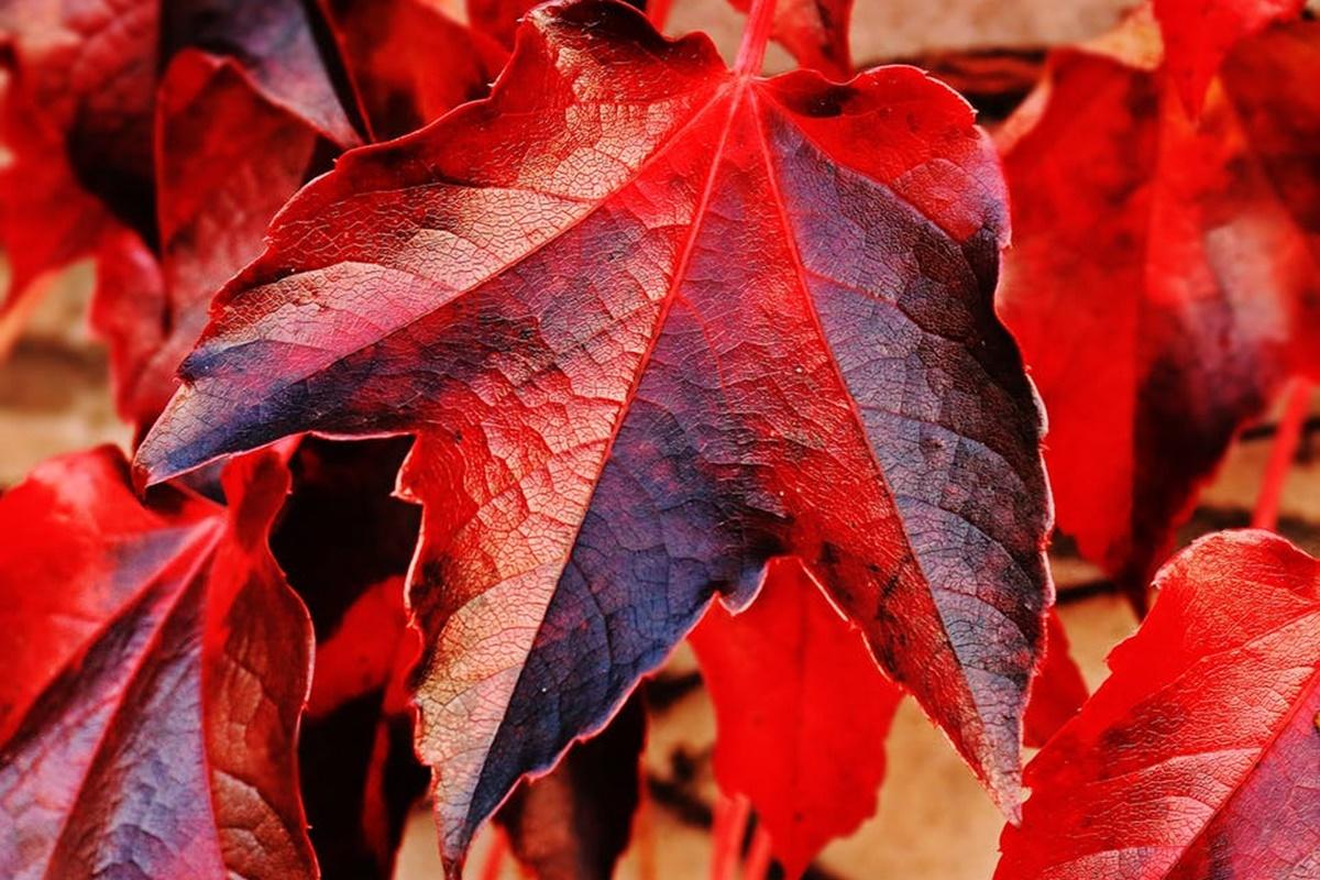 Mevsim Değişiminde Bağışıklığı Güçlendirme Formülleri
